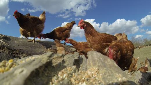 360° farms